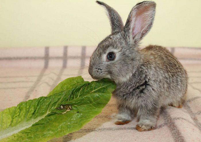 نگهداری خرگوش در آپارتمان