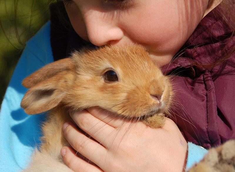 نگهداری خرگوش در خانه خوب است
