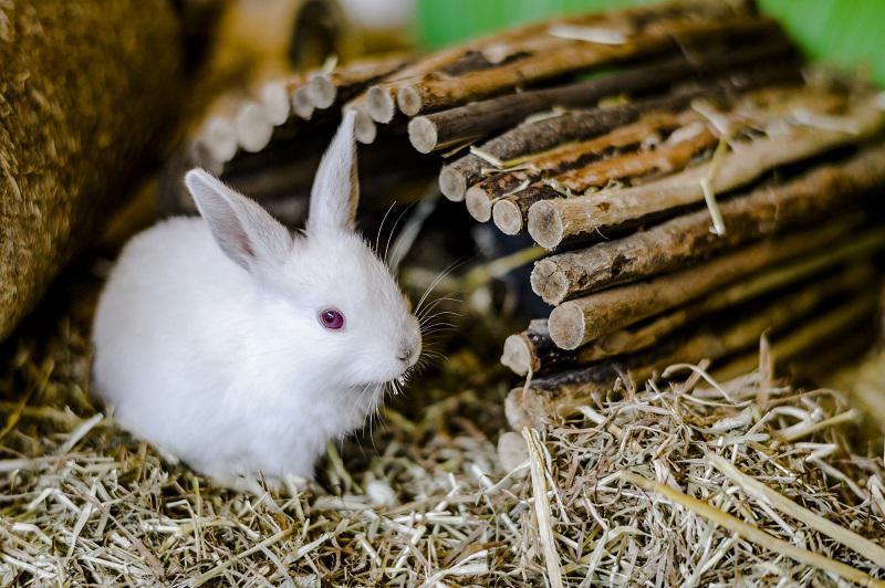 ایا نگه داشتن خرگوش بد است