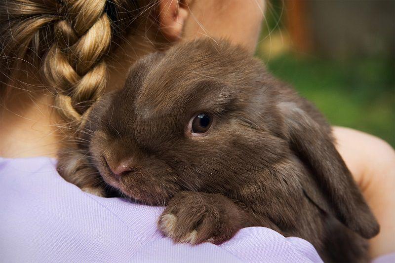 نگهداری بچه خرگوش