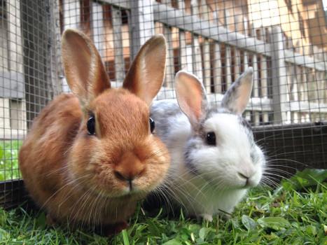 روش شستن خرگوش