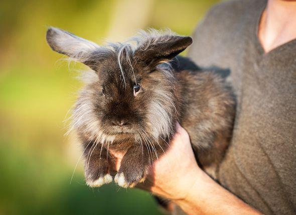 نحوه شستن خرگوش مینیاتوری