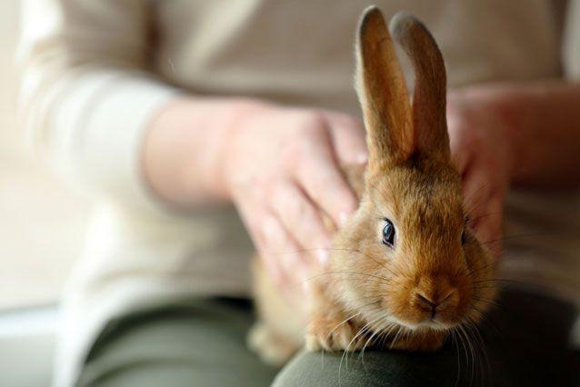 آموزش شستن خرگوش و روش شستن خرگوش خانگی