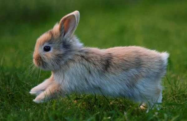 طرز شستن خرگوش و نحوه ی شستن خرگوش